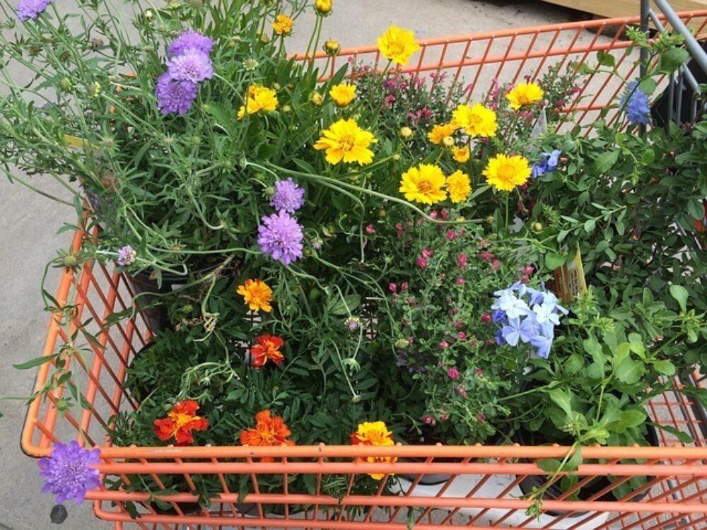 Marketing Ideas & Events To Promote Garden Centres
